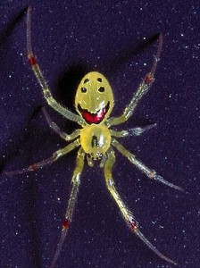 happy_face_spider_02